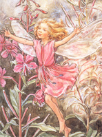 link to Flower Fairies Prints